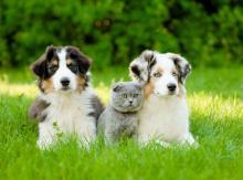 puppy, kitten