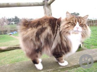 Cyrmic cat